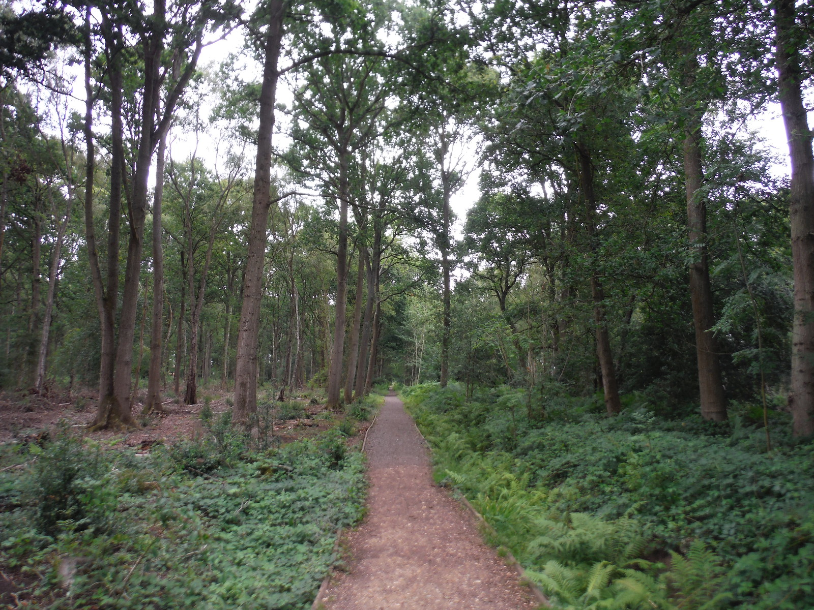 Rifle Range Path, West End Common Rifle Range SWC Short Walk 17 - Oxshott Heath, Esher and West End Commons