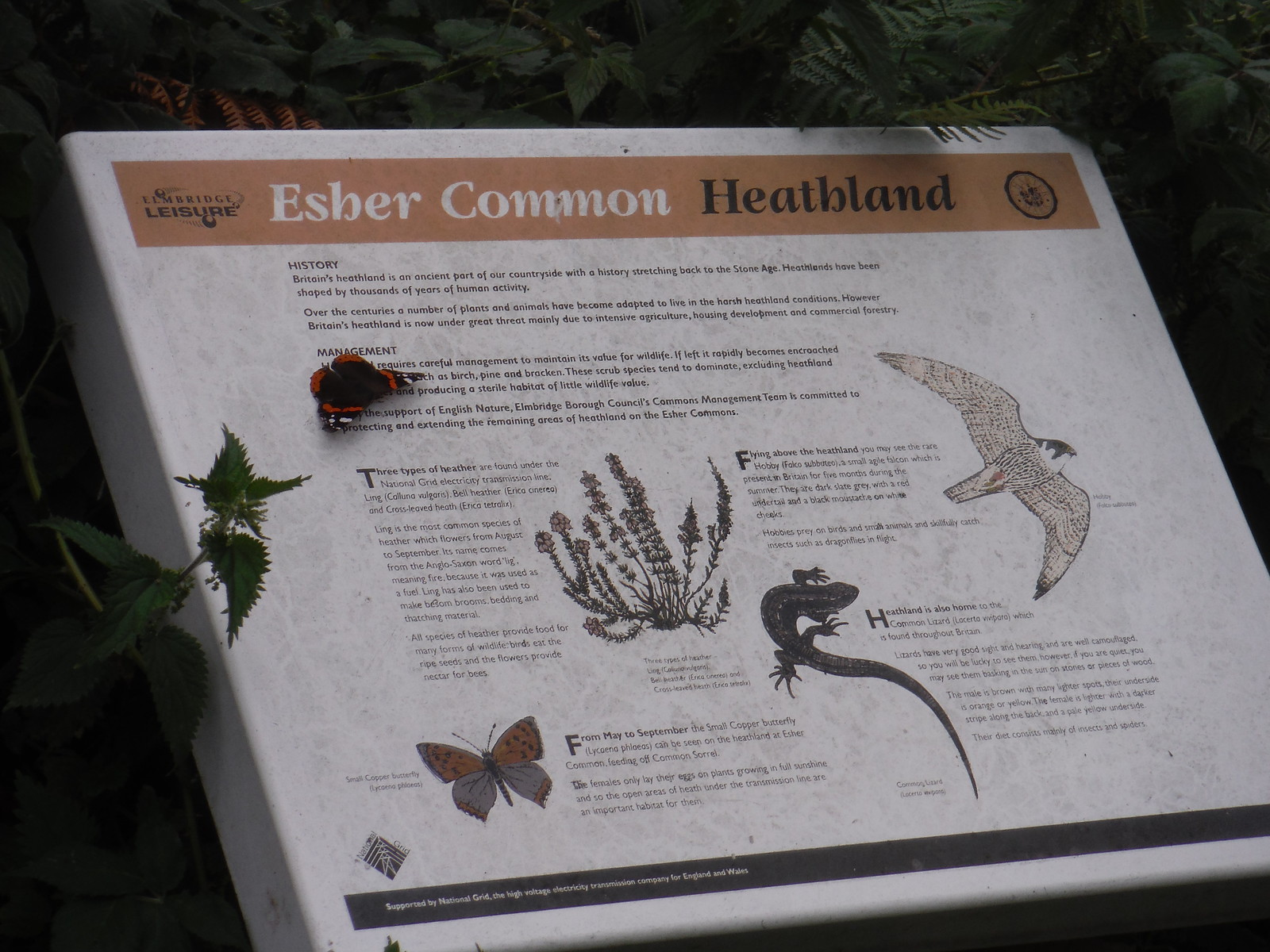 Butterfly on info panel with butterfly, Esher Common SWC Short Walk 17 - Oxshott Heath, Esher and West End Commons