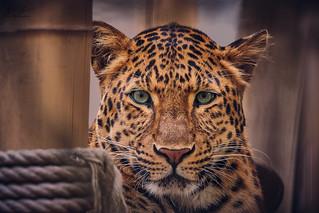 HHFotografie_Zoo_Hannover000820