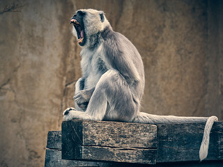 HHFotografie_Zoo_Hannover000819