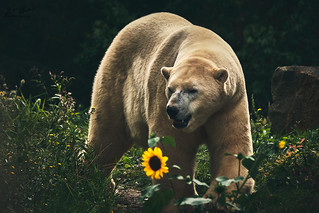 HHFotografie_Zoo_Hannover000817