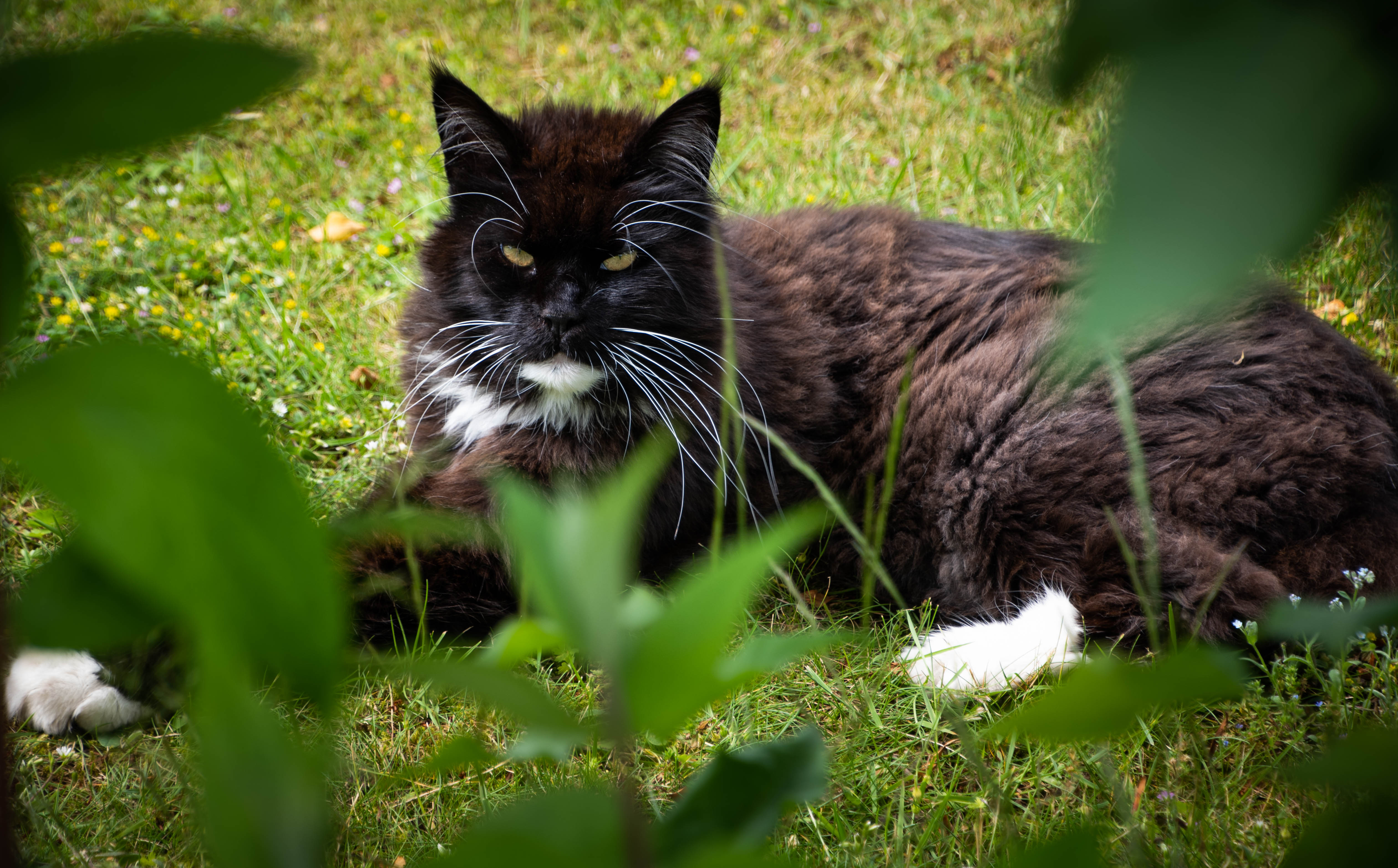 King Cat Ruling.jpg