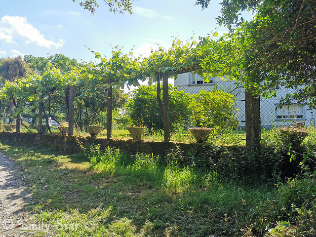 Camino Portugues - Tag 14-105444