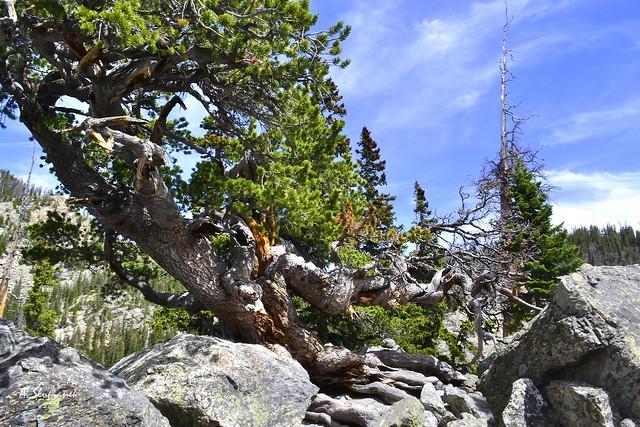 Old (Magic) Tree