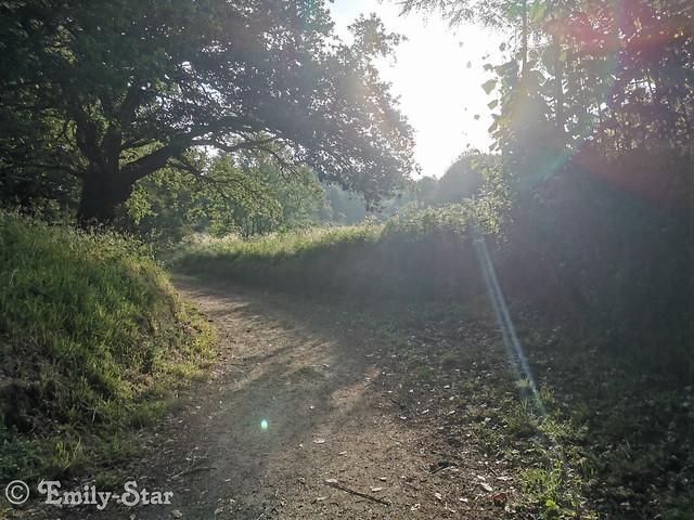 Camino Portugues - Tag 14-083139
