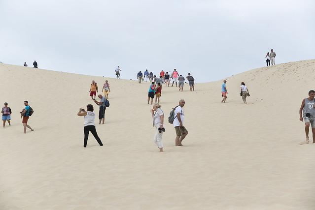 Formiche sulle dune