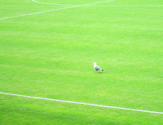 Disinterested Spectator, Dumbarton Football Stadium