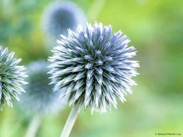 eyecatching floral