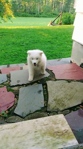 Back Patio - Puppy