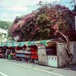 仲宗根ストア Konica 現場監督 Zoom 28-56 / Kodak 5207 V3 250D Nago, Okinawa, Japan