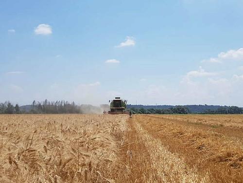 allarme cia su brevetti agricoltura