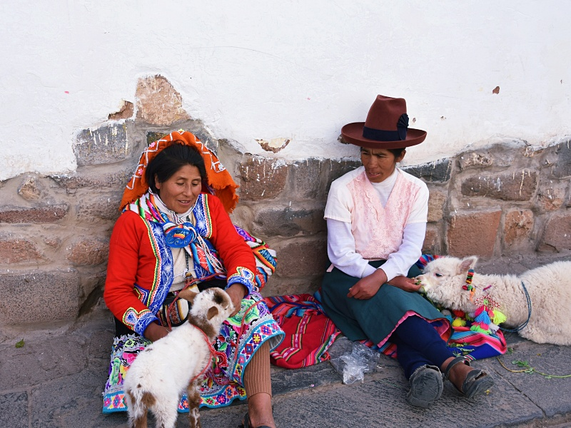 alpacas in Cusco