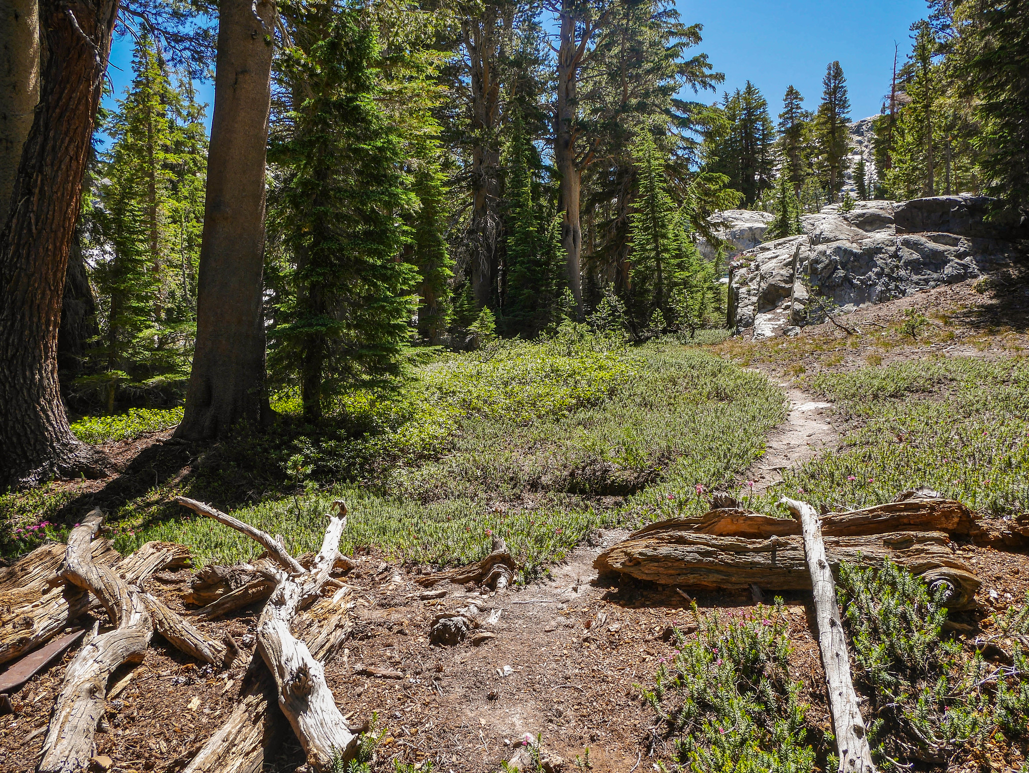 Old unmaintained Nydiver trail