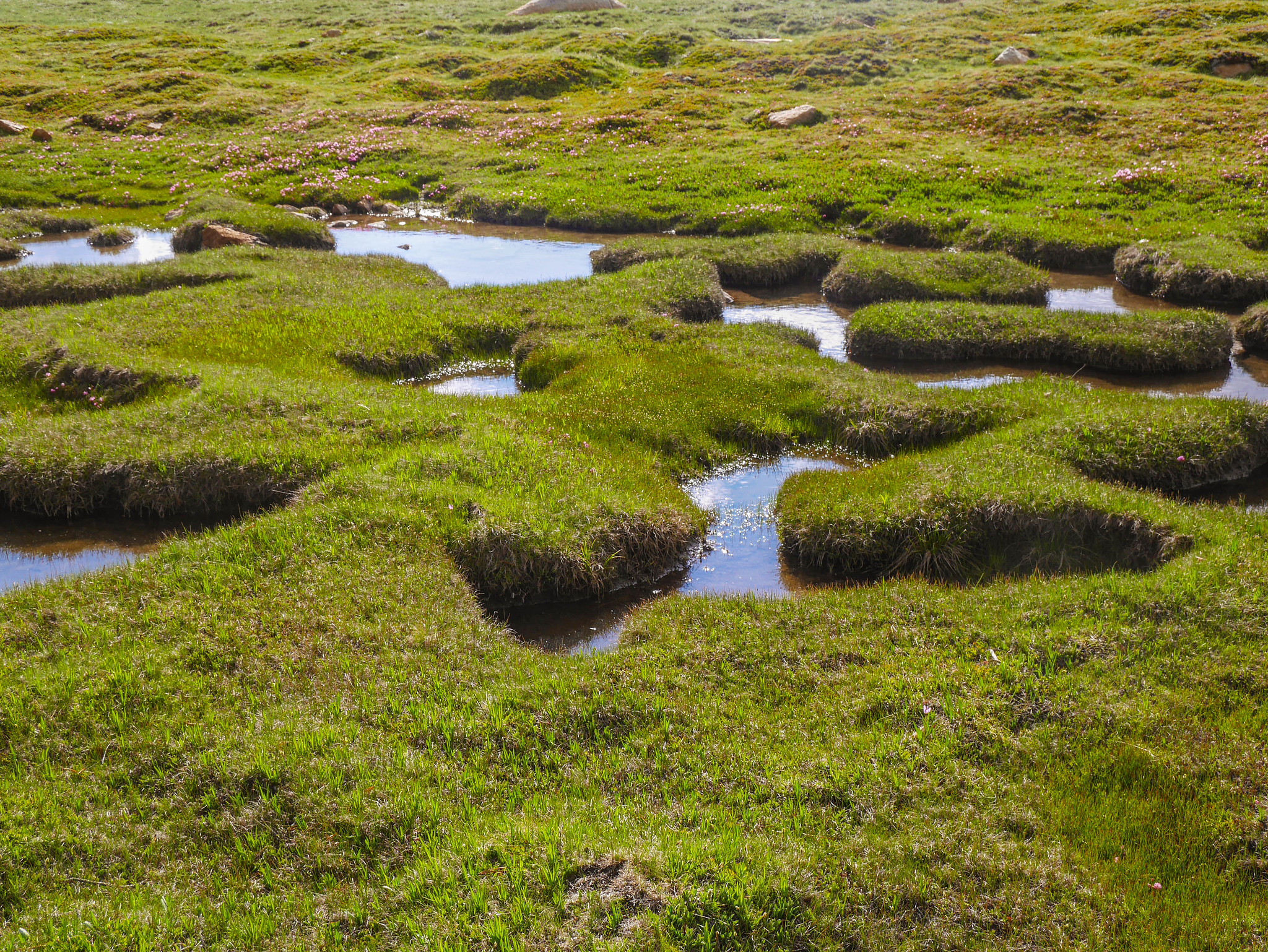 Lush spongy meadows!