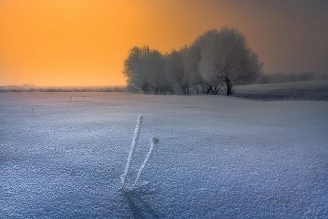 Frozen Bliss