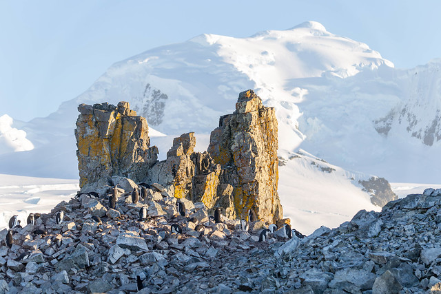 Half Moon Island - Antarctic Peninsula