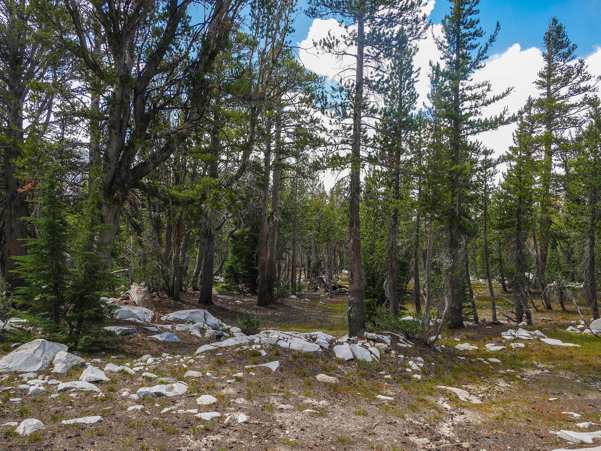 Open forest walking down to Elizabeth Lake