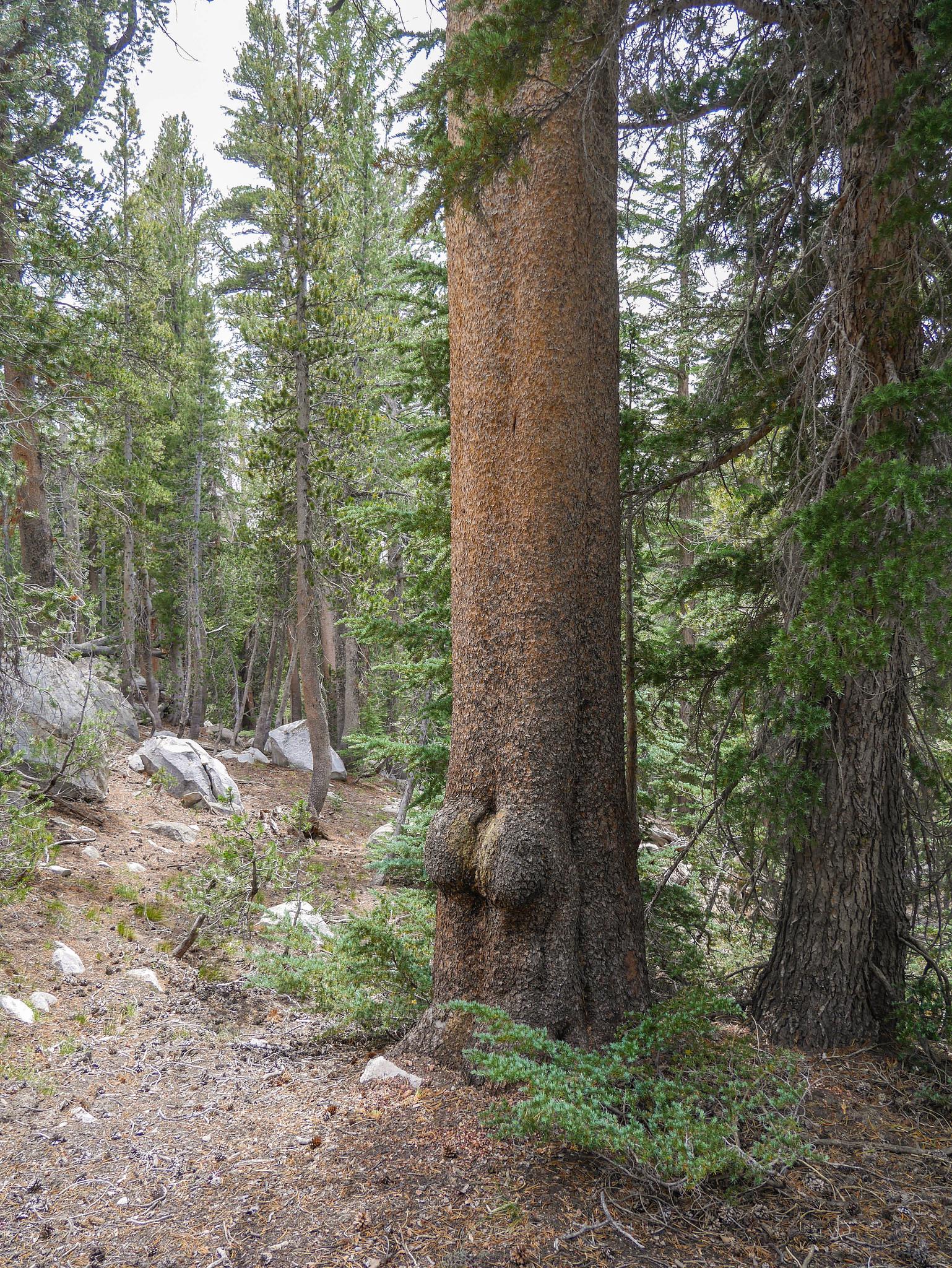 A tree butt