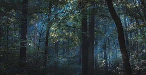 flickr forest woods tree outdoors outside nature optoutside nationalparkservice catoctin mountain park camping smoke fire sun sunlight sunbeams smokey eerie moody leaves trees depth dark shadow light landscape sony alpha a7rii ilce7rm2 tamron tamron2875 zoom lens bealpha sonyshooter