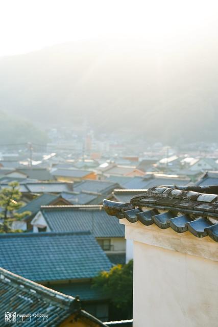 沐浴在暖陽和風裡:Sony FE 85mm F1.4 G Master | 15
