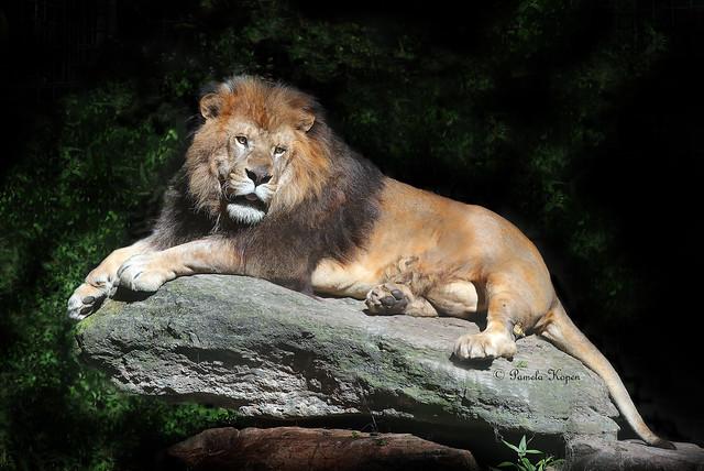 Monarch sitting on a monarch sitting on a rock ( zoom in on rear leg)