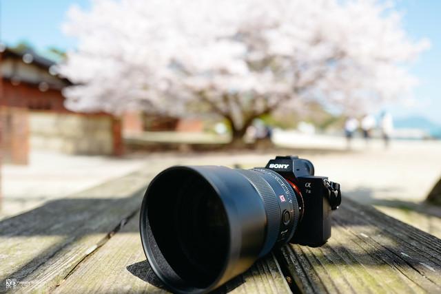 沐浴在暖陽和風裡:Sony FE 85mm F1.4 G Master | 01
