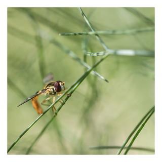 insecte 29  06 2019 04