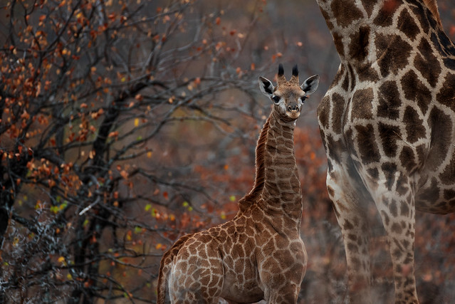 Wild life South Africa