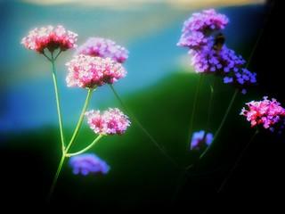 Blossom.