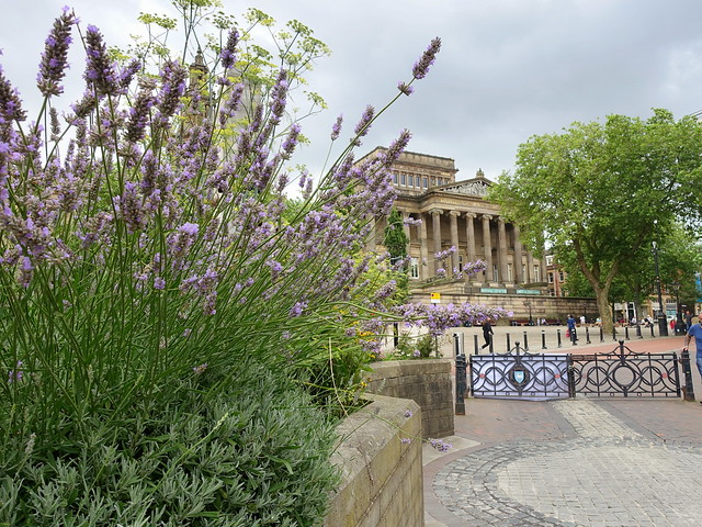 Summer flowers in Preston - Explored