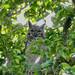Flickr photo 'Great Horned Owl (Bubo virginianus)' by: Bernard DUPONT.