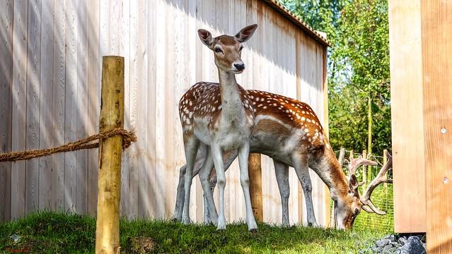 Bambi - 7233