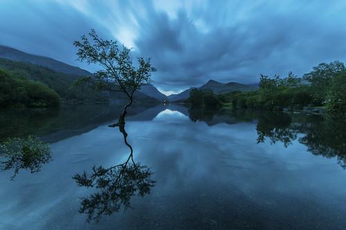 Lone Tree Blue Hour