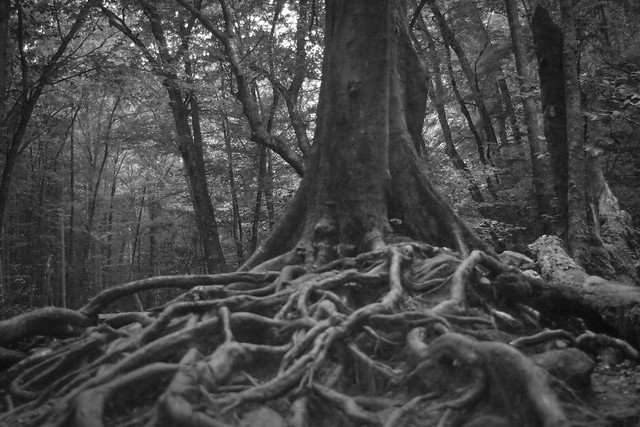 Web of roots