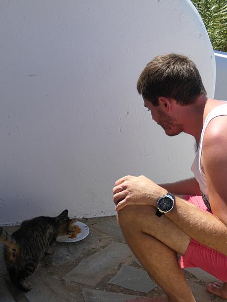 clem nourrit les chats