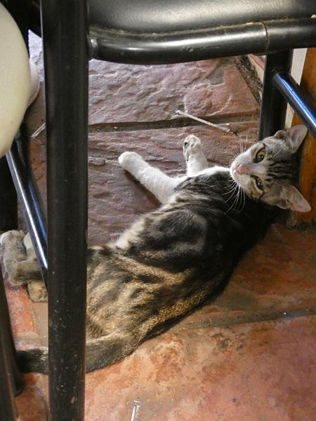 petit chat du Pirée
