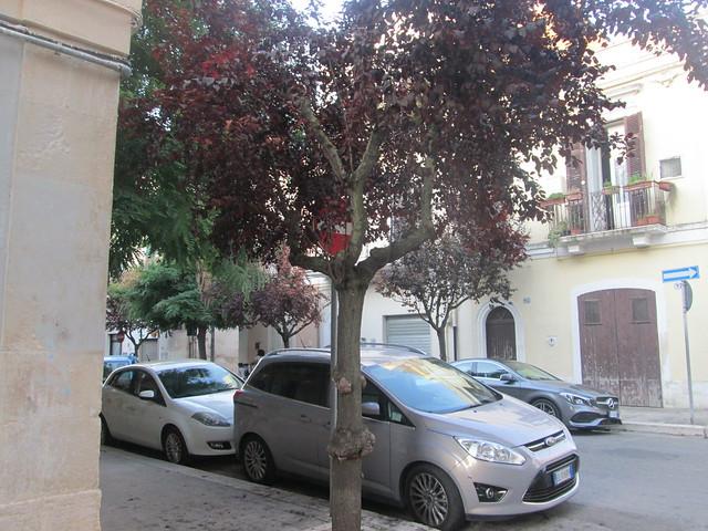 alberi da frutto ornamentali