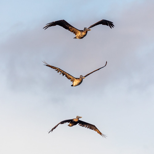 portstjoe florida unitedstatesofamerica capesanblas birds seagulls ocean beach interesting nature