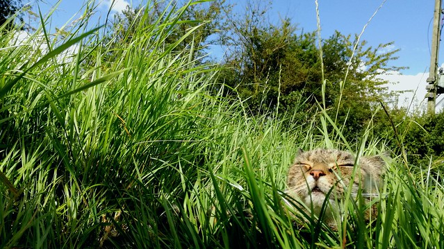 Cat hidden in long grass, blissfully taking in the sun's rays.