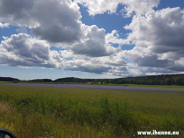 The sky and a field of Cornflowers - Photo Copyright by Hanna Andersson, Studio iHanna #sweden