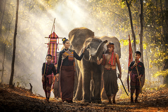 Elephant mahout portrait. Wild elephant ritual ceremony of Surin people. The Kuy (Kui) People of Thailand. The mahout and the elephant at surin, Thailand.