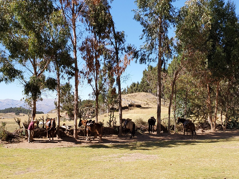 horse ranch cusco