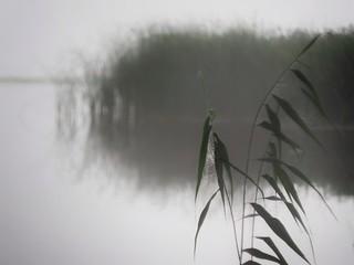 Lil'bit foggy.
