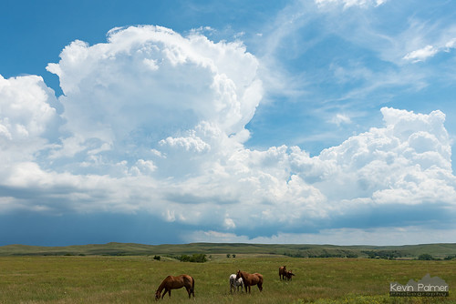 southdakota summer august storm thunderstorm weather sky clouds cumulonimbus green hills grass tamron2470mmf28 afternoon horses animals philip nikond750