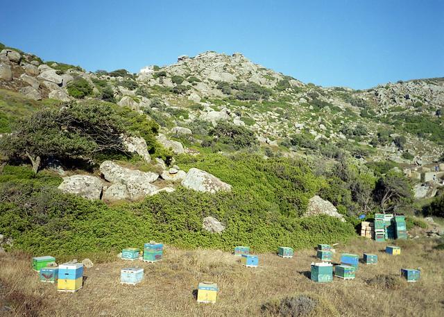 Pasieka w Volax / Apiary in Volax / Μελισσοκομία στο Βώλαξ