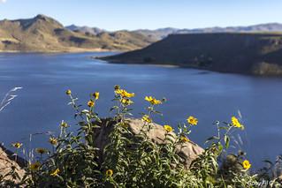 Flor del lago