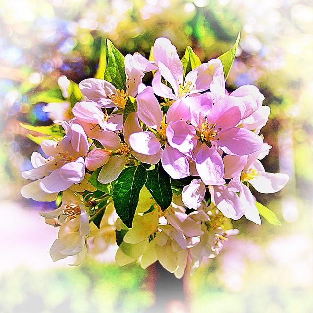 Toronto Ontario ~ Canada ~ Edwards Botanical Gardens ~  Summer Flower Cluster