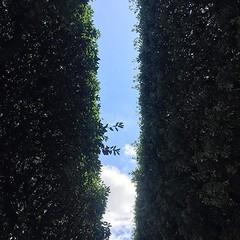 #Buongiorno Sapienza con una foto dei vialetti alberati della Città universitaria di @lucreziaspagnoli ・・・ #Repost: «Everything you leave is gone  #university #wandering #sapienza» ・・・ #repostSapienza #ImmaginiDallaSapienza di #studentiSapienza #CittàUniv