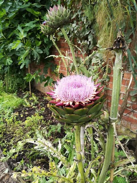 Flower/Thistle
