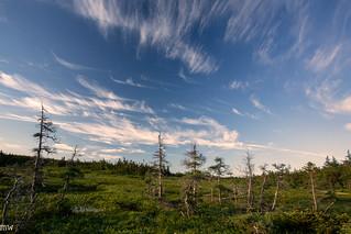 The Maritimes #25: Bog Trail, Cape Breton Highlands National Park